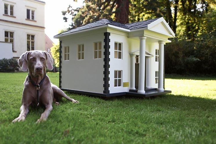 cani da giardino golden retriever italia On giardino e cani
