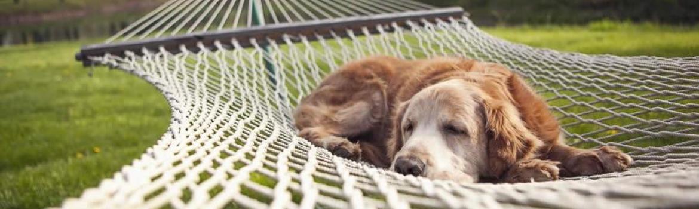 cani in campeggio