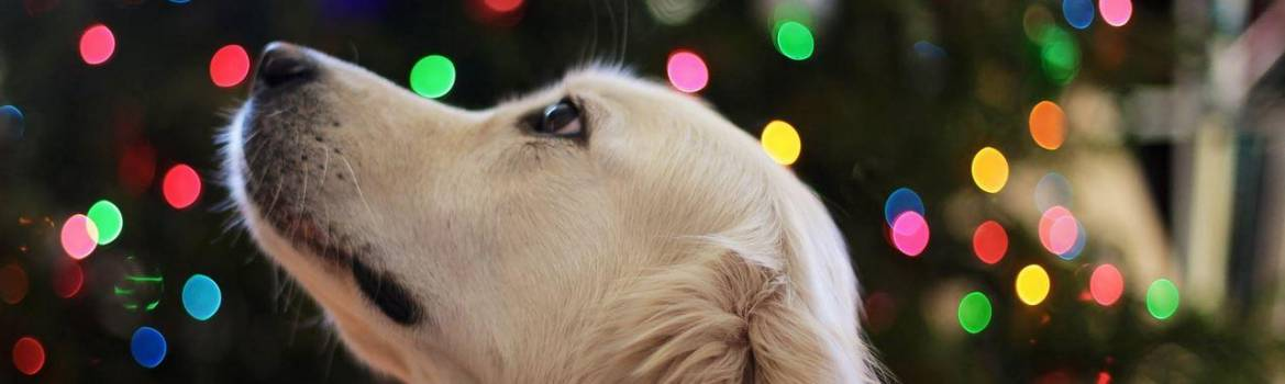 Cani e piante natalizie: No panic