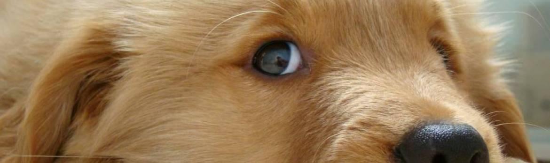 Che colori vedono i cani?