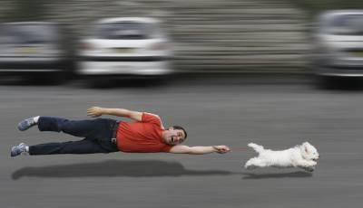 cane tira guinzaglio