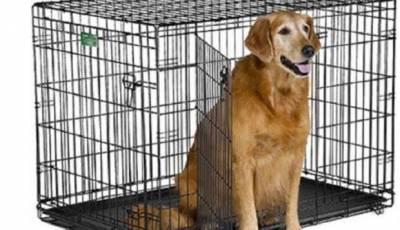 il kennel per cani